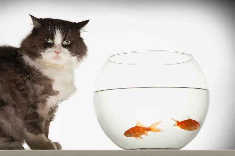 Choisir une médaille à son chat