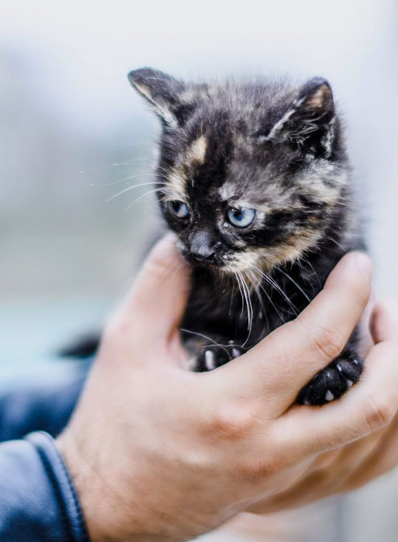 Petit chat dans des mains